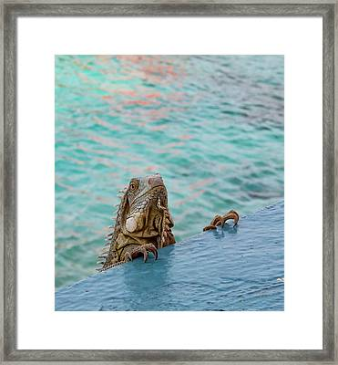 Green Iguana Peering Over Wall Framed Print by Jean Noren