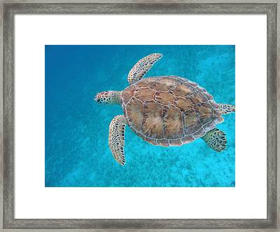 Green In Blue Framed Print