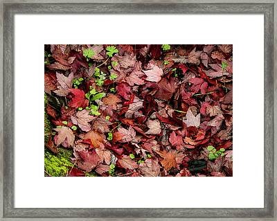 Green In The Red Framed Print