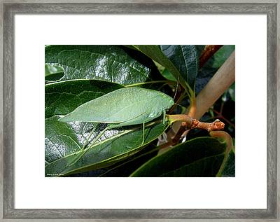 Green Insect Framed Print by Suhas Tavkar