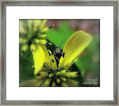 Macro Green Insect Yellow Flower Framed Print