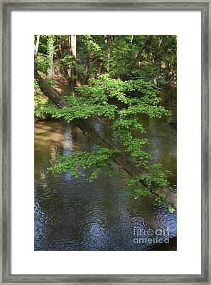 Framed Print featuring the photograph Green Is For Spring by Skip Willits