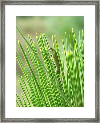 Framed Print featuring the photograph Green Is Good by Peg Urban