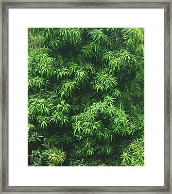 Green Is Life Framed Print by Happy Home Artistry