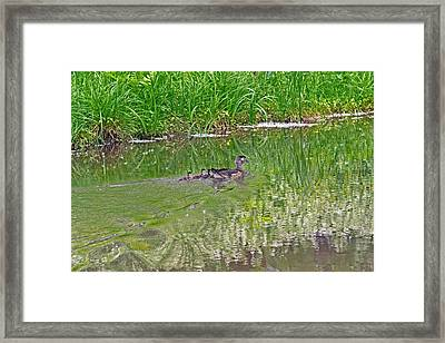 Green Is The Nature Framed Print