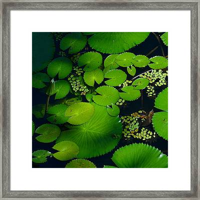 Green Islands Framed Print by Evelyn Tambour