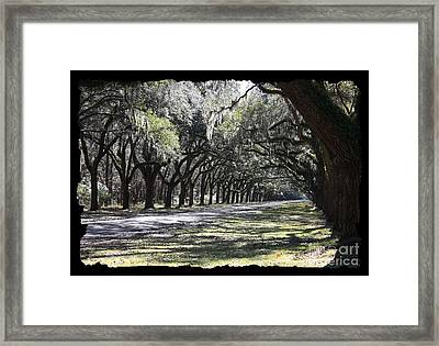 Green Lane With Live Oaks - Black Framing Framed Print by Carol Groenen