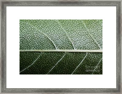 Green Leaf Geometry Framed Print