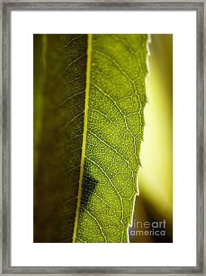 Green Leaf Lines Framed Print