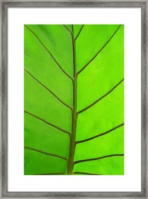 Green Leaf Framed Print by Marcus Adkins