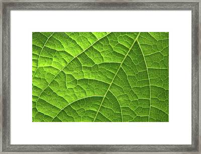 Green Leaf Structure Framed Print by Aidan Moran