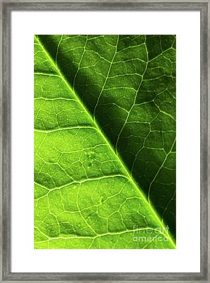 Framed Print featuring the photograph Green Leaf Veins by Ana V Ramirez