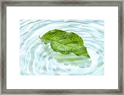Green Leaf With Water Reflection Framed Print by Sandra Cunningham
