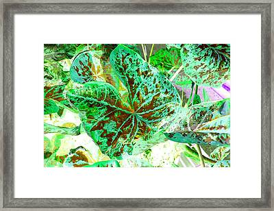 Framed Print featuring the photograph Green Leafmania 1 by Marianne Dow