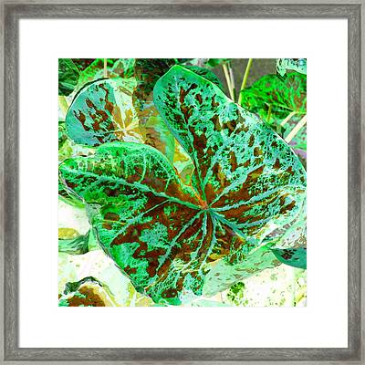 Green Leafmania 2 Framed Print by Marianne Dow