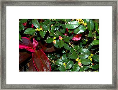 Green Leafs And Pink Flower Framed Print by Michael Thomas