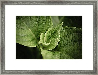 Green Leaves Abstract II Framed Print by Marco Oliveira