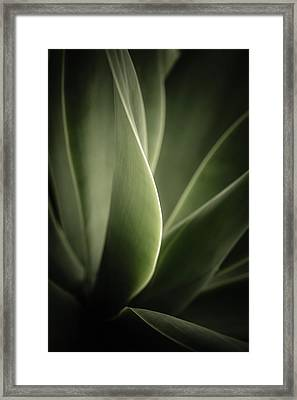 Green Leaves Abstract Framed Print by Marco Oliveira