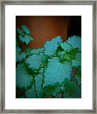 Green Leaves And Terra Cotta Framed Print by Patricia Strand