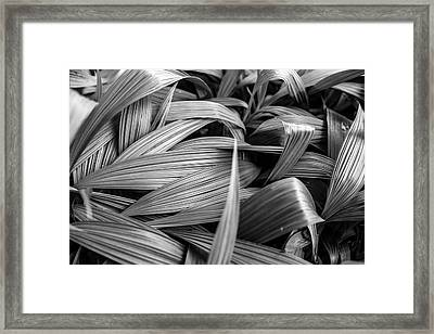 Leaves Textured And Background Framed Print by Jingjits Photography