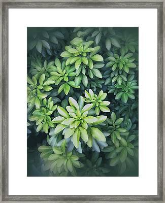 Green Leaves Background Framed Print