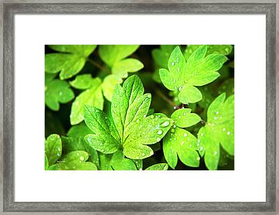 Framed Print featuring the photograph Green Leaves by Christina Rollo