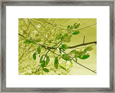 Green Leaves Framed Print by Russ Mullen
