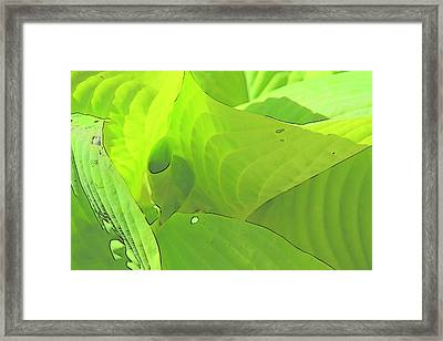 Green Leaves Sketch 2 Framed Print