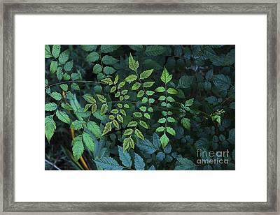 Green Leaves Framed Print by Viktor Savchenko