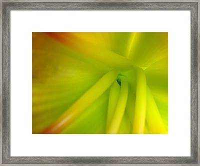 Green Light Framed Print by Juergen Roth