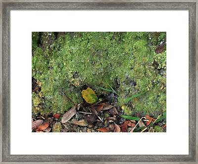 Green Man Spirit Photo Framed Print