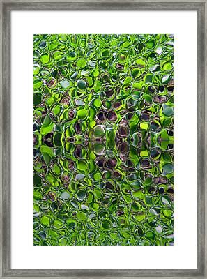 Green Marbles Framed Print by Tina M Wenger