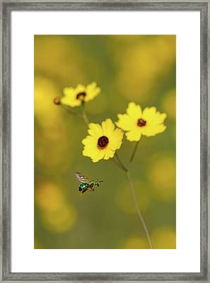 Green Metallic Bee Framed Print