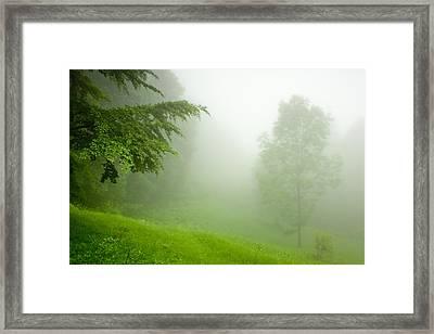 Green Mist Framed Print by Evgeni Dinev