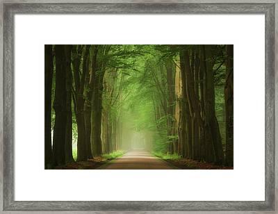 Green Mist Framed Print by Martin Podt