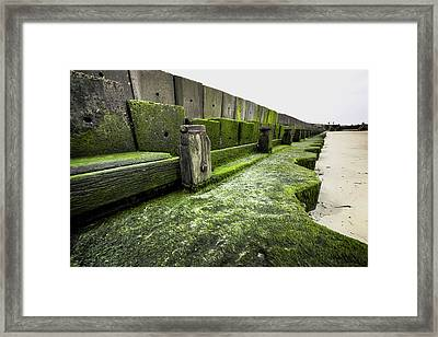 Green Moss Framed Print