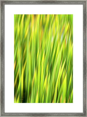 Green Nature Abstract Framed Print by Christina Rollo
