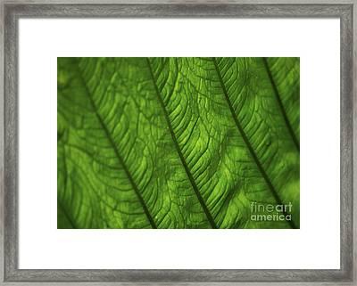 ..green.. Framed Print