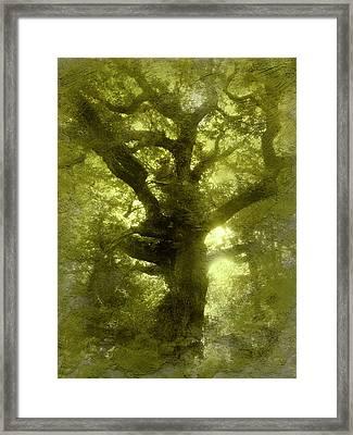 Green Oak Framed Print