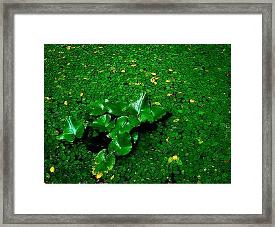 Green On Green Framed Print by Ron Plasencia