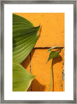 Green On Orange 4 Framed Print by Art Ferrier