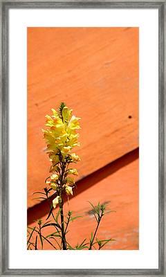 Green On Orange 5 Framed Print by Art Ferrier