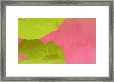 Green On Pink 1 Framed Print by Art Ferrier