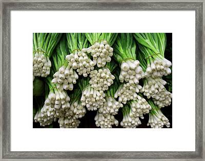 Green Onions Framed Print by Todd Klassy