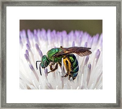 Green Orchid Bee Framed Print
