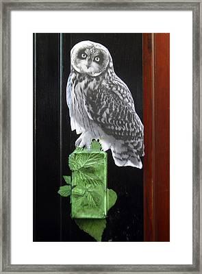 Green Owl Framed Print by Jez C Self