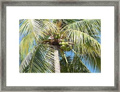 Green Palms And Blue Skies Framed Print
