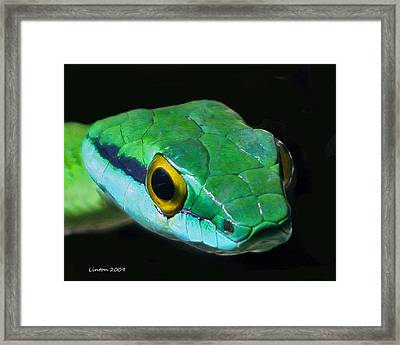 Green Parrot Snake Framed Print by Larry Linton