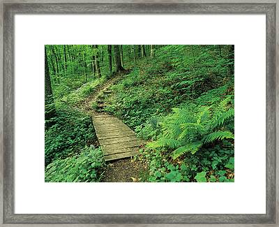 Green Path Framed Print by Jim Nelson