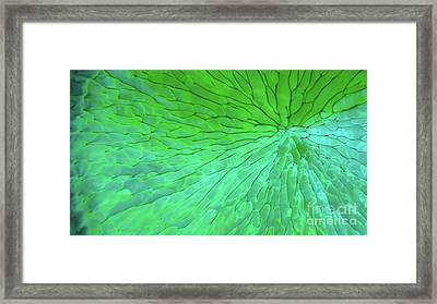 Green Pattern Under The Microscope Framed Print